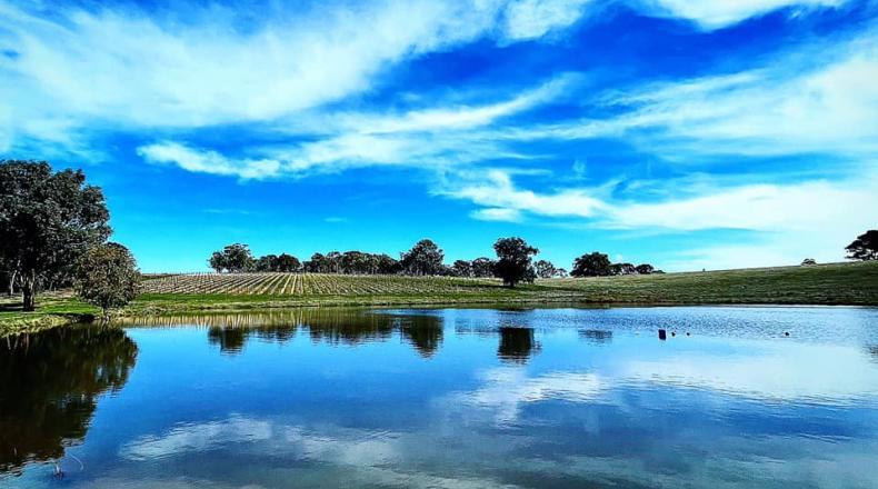 Savaterre Vineyard view